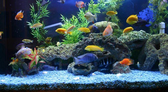 Как сохранить биологическое равновесие в аквариуме