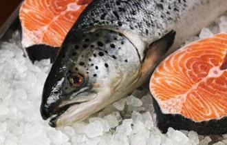 Свежий лосось купить в спб